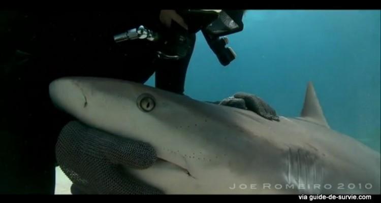 Requin, immobilité tonique et catalepsie