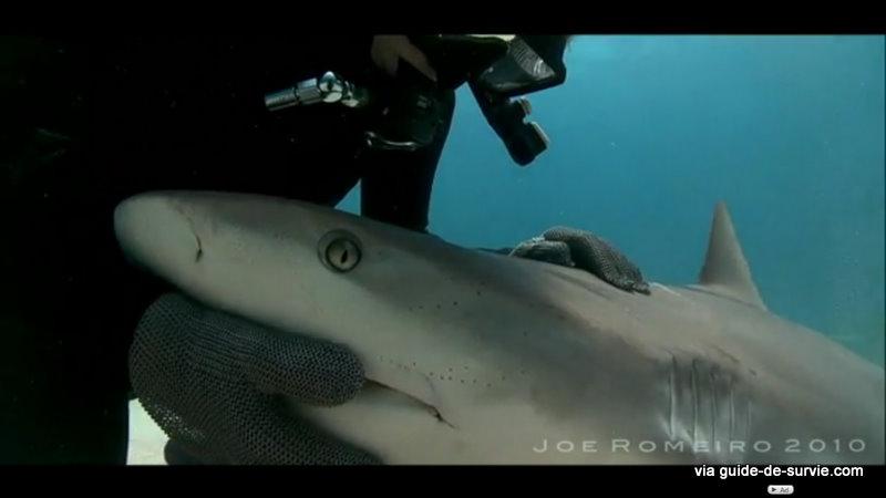 conseils en cas de rencontre avec un requin