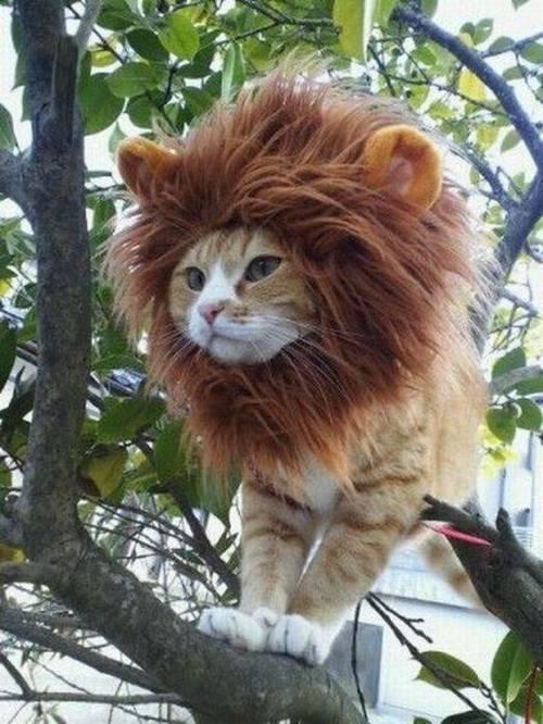 Ceci n'est ni un tigre, ni un lion