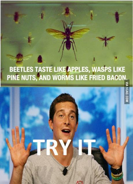 Les scarabées ont le gout de pomme, les guèpes ont un goût de pignon de pin, et les vers de terre ont le goût du bacon grillé. Essayez pour voir.