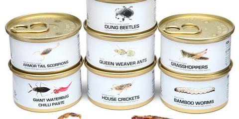 Les insectes en boite. Miam.