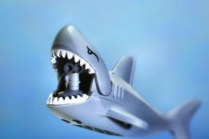 requin immobile