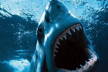 survivre-requin-blanc